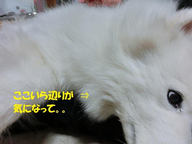 e0196135_2313020.jpg