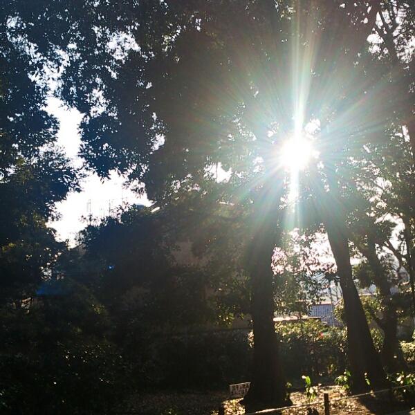 森の力_d0155439_13324744.jpg
