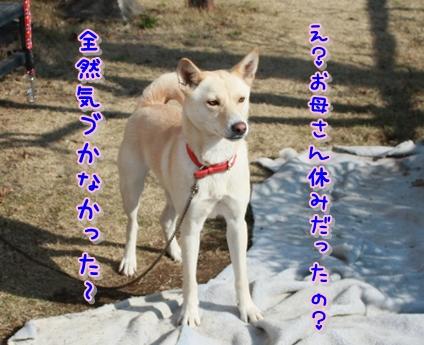 f0195543_22492195.jpg
