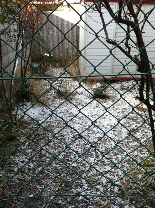 雪の日に_c0185356_9415431.jpg