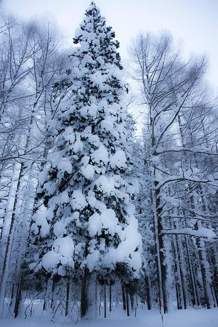 雪回廊_e0271864_22234218.jpg