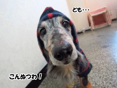 d0020869_15683.jpg