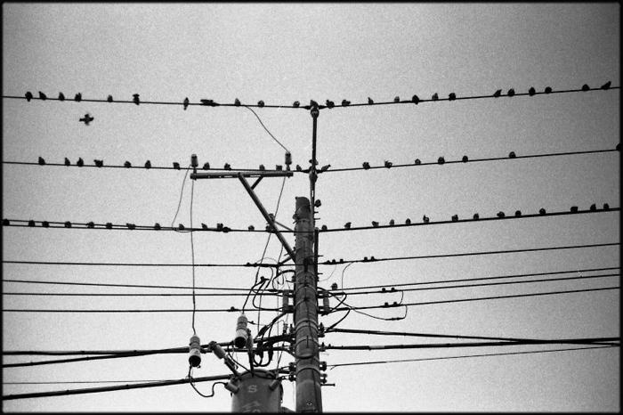 鳥_a0281778_2316482.jpg