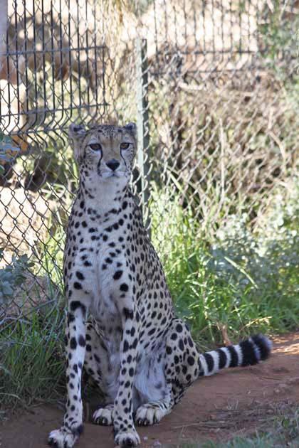 動物園の猫族たち_e0092286_0533359.jpg