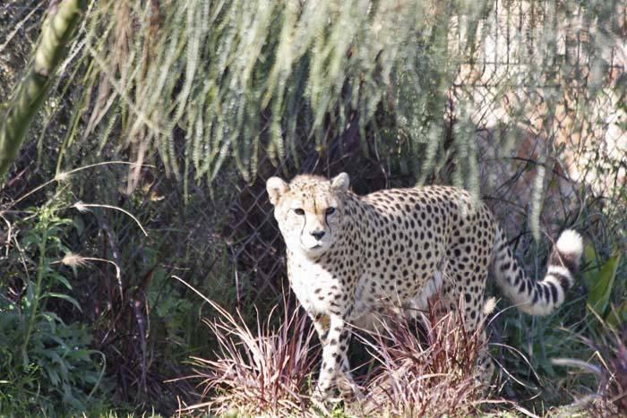 動物園の猫族たち_e0092286_0573934.jpg