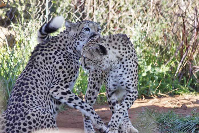 動物園の猫族たち_e0092286_0595076.jpg
