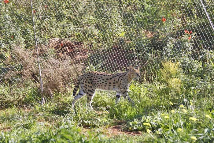 動物園の猫族たち_e0092286_135234.jpg