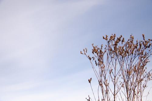 冬のお散歩_f0106597_0331632.jpg