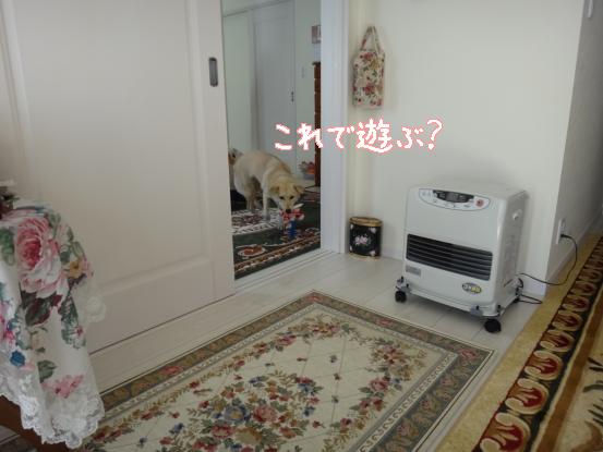昼食会_f0064906_1753577.jpg