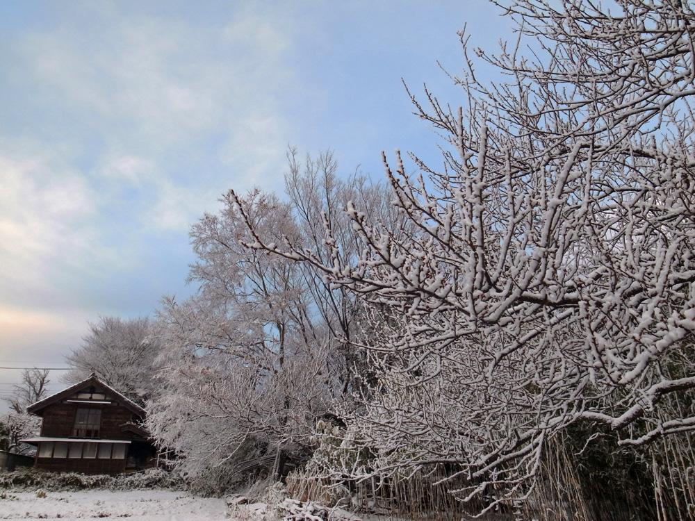 雪化粧_e0004009_1535945.jpg