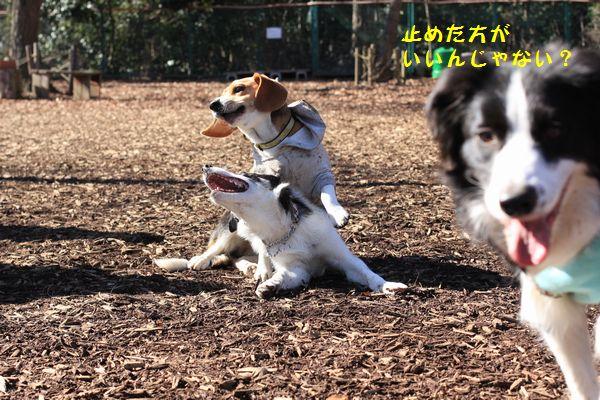 久しぶりの保育園_d0224111_1763498.jpg
