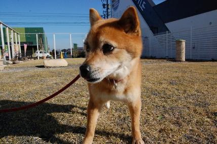 1/29 お散歩_e0236430_180271.jpg