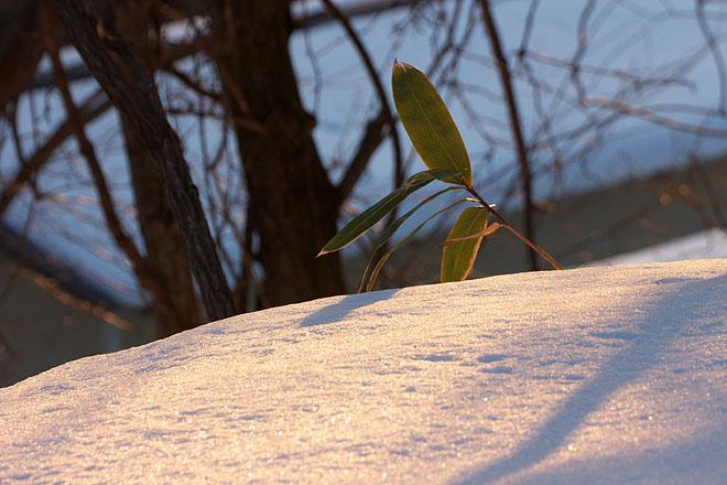 大岡山雪景色 ~Evening Glow~_c0067040_22475215.jpg