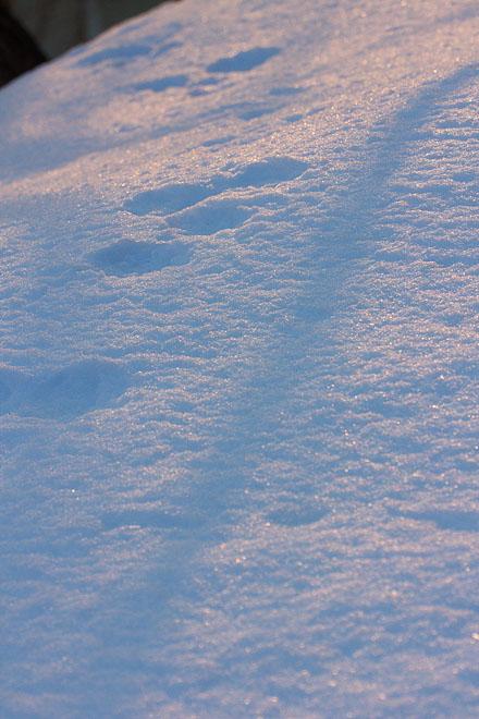 大岡山雪景色 ~Evening Glow~_c0067040_22482295.jpg