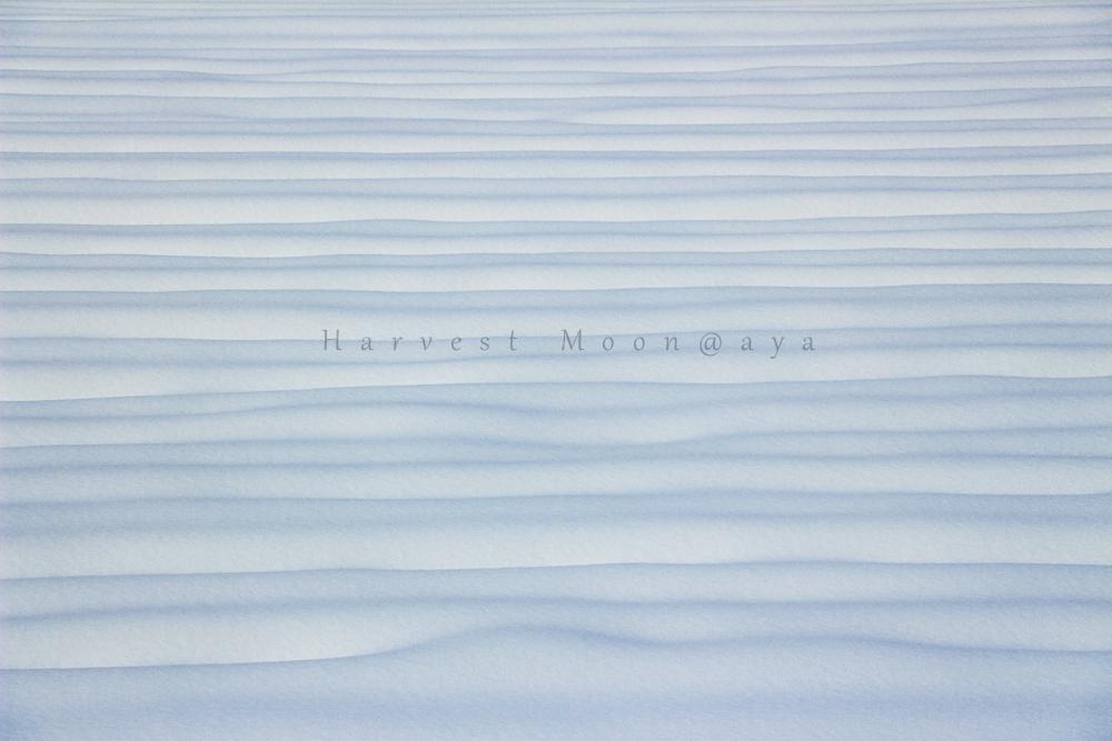 雪景色~覆うとき_b0208495_2093111.jpg