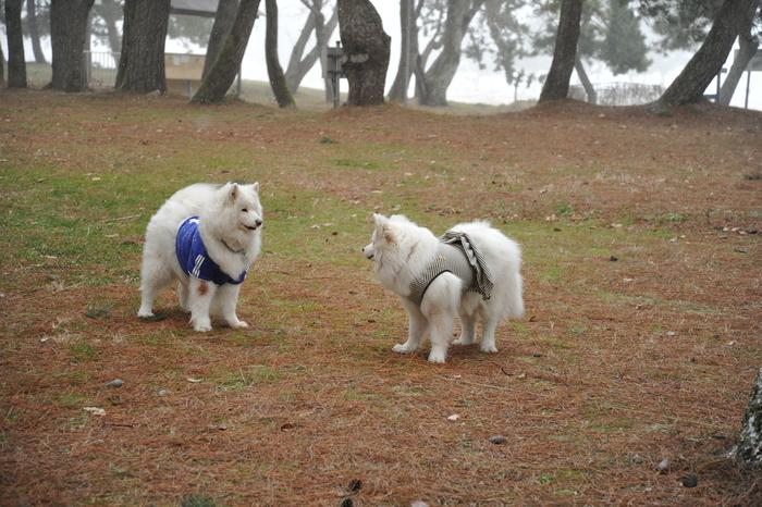 雪中キャンプ in 知内浜 part1_a0049296_20315252.jpg
