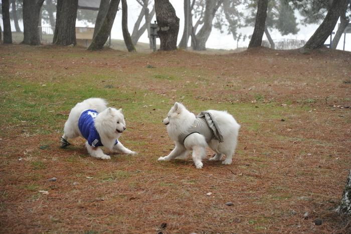 雪中キャンプ in 知内浜 part1_a0049296_20322217.jpg