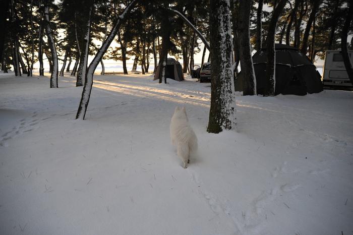 雪中キャンプ in 知内浜 part2_a0049296_2105464.jpg