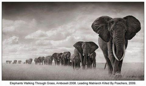 アフリカゾウのいない地球を想像できますか?/滝田明日香_a0083222_11253316.jpg