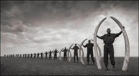 アフリカゾウのいない地球を想像できますか?/滝田明日香_a0083222_11254366.jpg