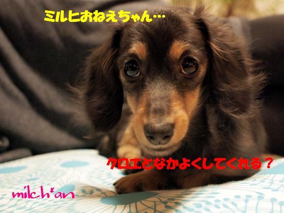 b0115642_226355.jpg