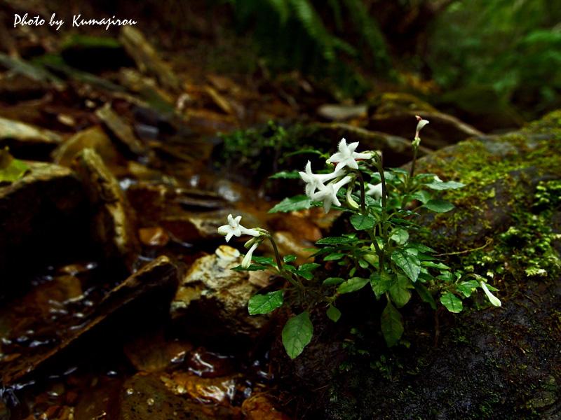 渓流の探索_b0192746_20115172.jpg