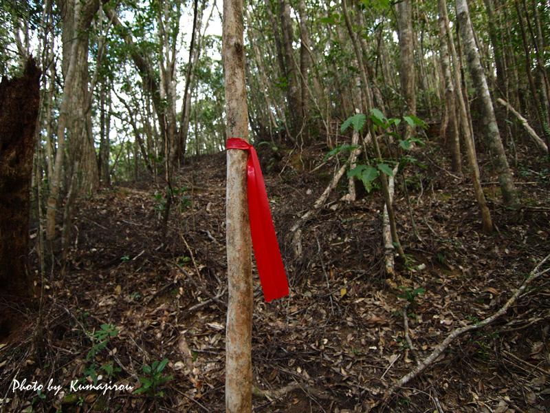 渓流の探索_b0192746_20123799.jpg