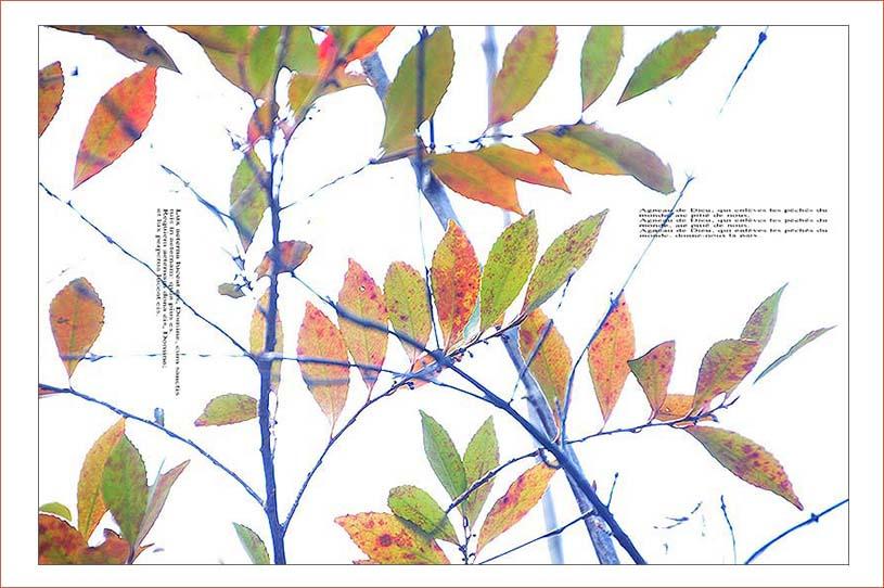 f0198771_003665.jpg