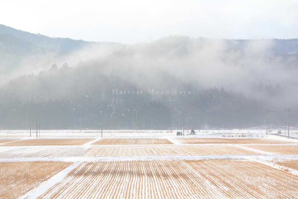 雪景色~模様があるとき_b0208495_18522166.jpg