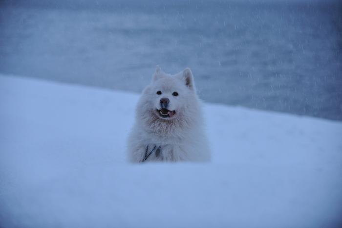 雪中キャンプ in 知内浜 part4_a0049296_18532866.jpg