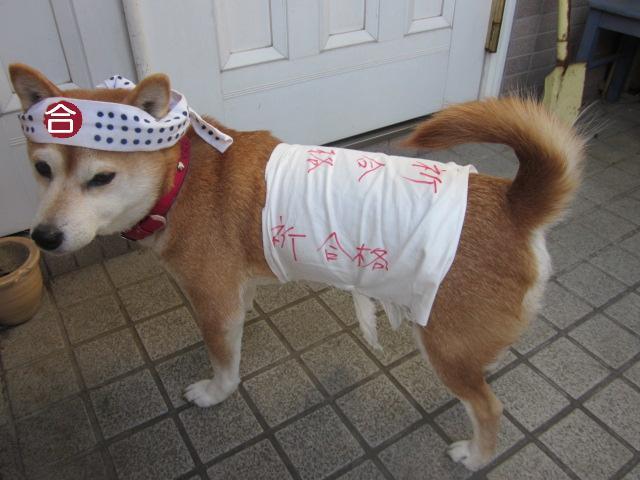 今年も強力な応援犬_f0024310_13371989.jpg