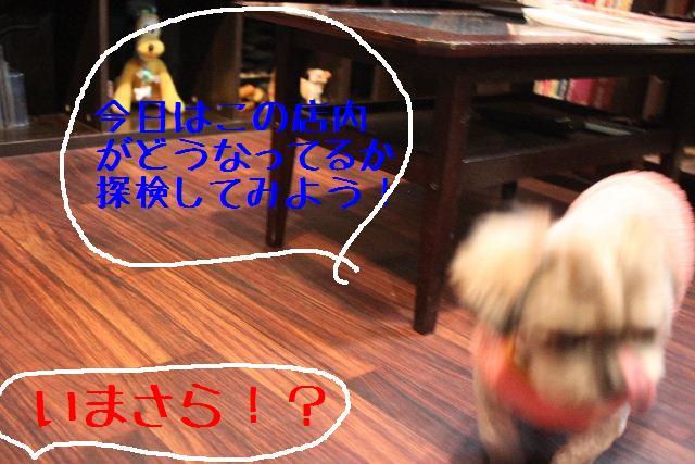 b0130018_1718536.jpg