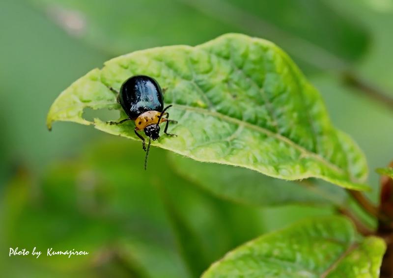 ぶらり昆虫写真_b0192746_19284914.jpg