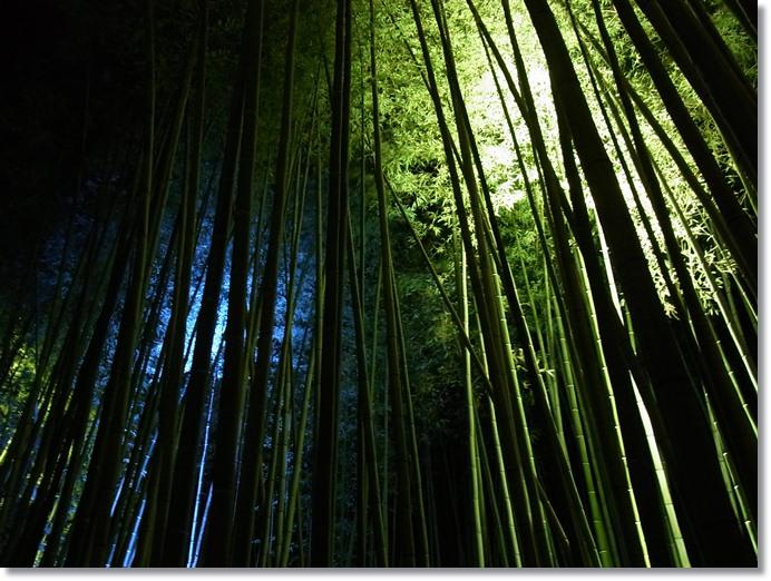 嵐山花灯路_b0025947_1333541.jpg