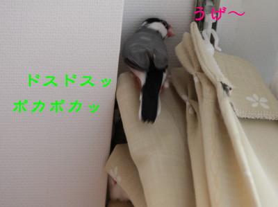 b0158061_21202421.jpg