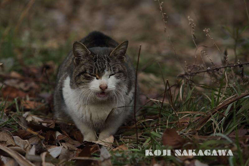1022  猫と人_c0049767_1962146.jpg