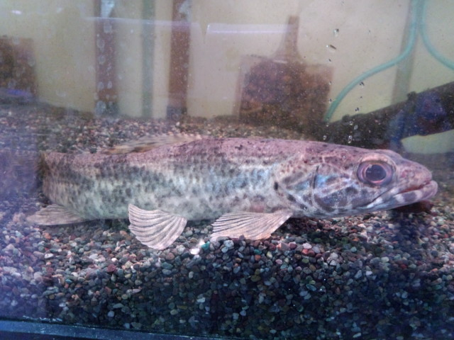 本年最初の熱帯魚仕入遠征_b0141806_1264858.jpg