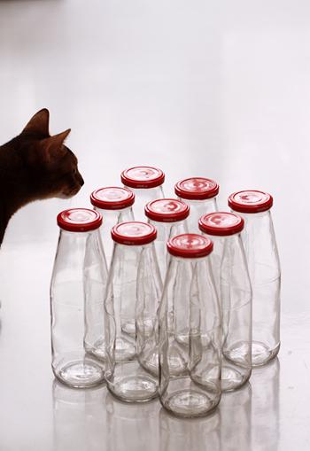 [猫的]キッチリ並べる_e0090124_2354229.jpg