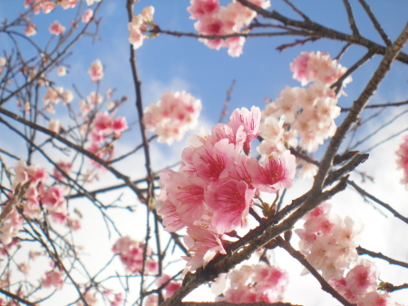 13.2.1 冬ですが・・春・夏・秋も楽しんで。_b0100730_20352749.jpg