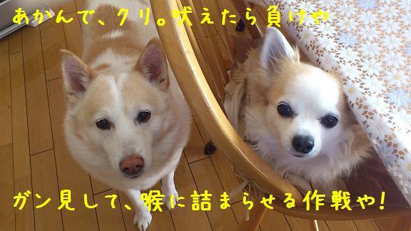 b0138430_11221583.jpg