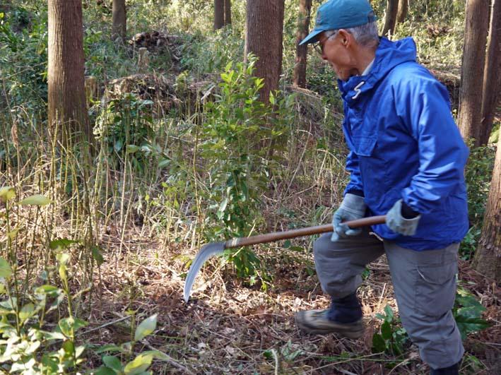 杉林のカラスザンショウの刈り取りほぼ終了1・30六国見山_c0014967_8391138.jpg