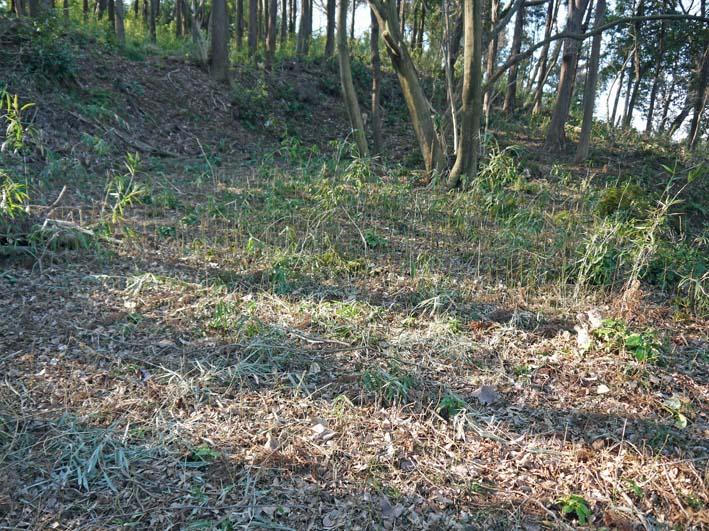 杉林のカラスザンショウの刈り取りほぼ終了1・30六国見山_c0014967_8424183.jpg