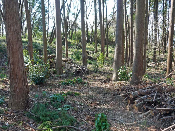 杉林のカラスザンショウの刈り取りほぼ終了1・30六国見山_c0014967_8514419.jpg