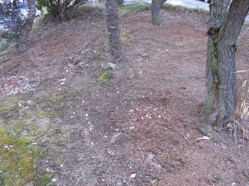 最新版:天狗と土壌をステラLスマートアシストと共に語る。_f0076731_224449.jpg