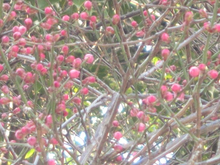 梅の喜び_d0155439_23311941.jpg