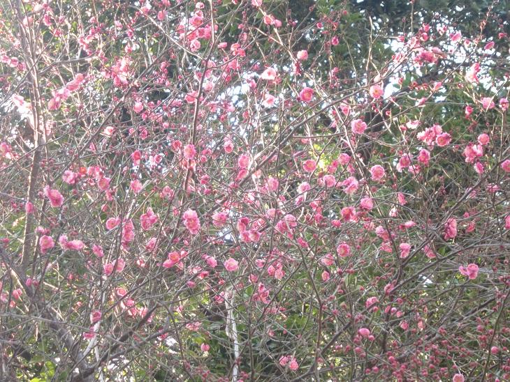 梅の喜び_d0155439_23315322.jpg