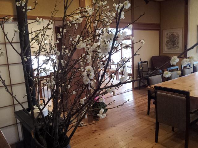 梅が咲きました♪_f0244543_1729653.jpg