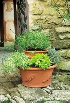 Herb Pan Pot_d0229351_22201845.jpg