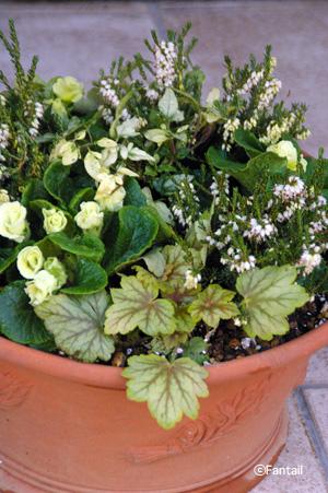 Herb Pan Pot_d0229351_22202027.jpg