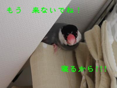 b0158061_2124452.jpg